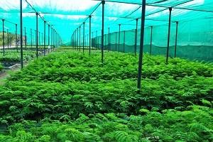 Bibit berbagai jenis tanaman