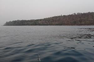 hutan pulau moyo