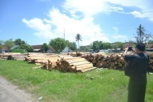 kayu jati hasil illegal logging