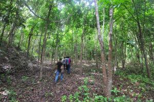 Hutan reklamasi PTNMR