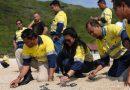Amman Mineral Bebaskan Karyawan Gunakan Hak Pilih pada Pilkada Serentak 2020