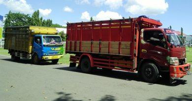 Pengiriman 31 Sapi ke Lombok Digagalkan Petugas