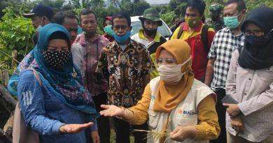 Bulog Berharap Kualitas Panen Petani di Sumbawa dan KSB Tetap Terjaga